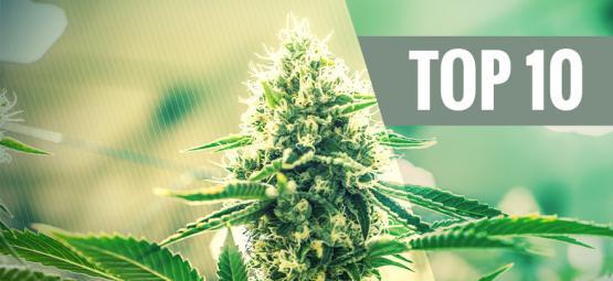 Top 10 Kush Cannabis Soorten