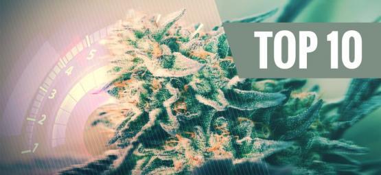 Top 10 Snelste Cannabissoorten