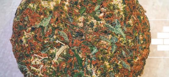 Wat Is Brick Weed?
