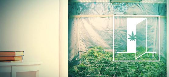 Hoe Kweek Je Cannabis In Een Kast?