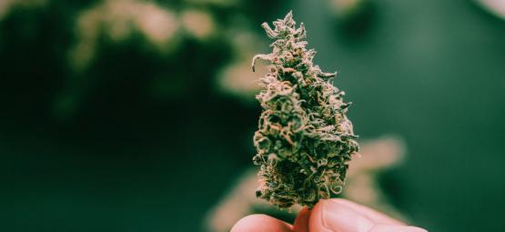 5 Superplakkerige Cannabissoorten
