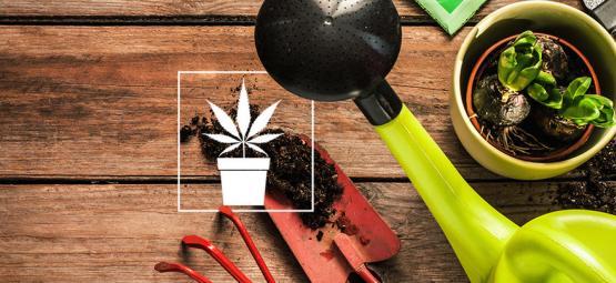 10 Onmisbare Hulpmiddelen Voor De Cannabis Kweker