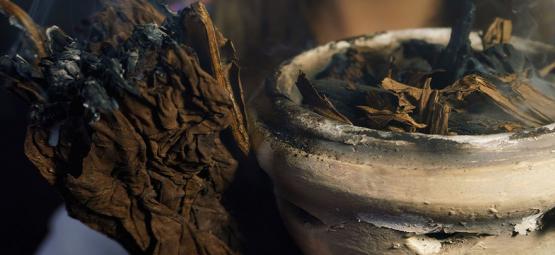 De 7 Heilige Planten Van De Wereld