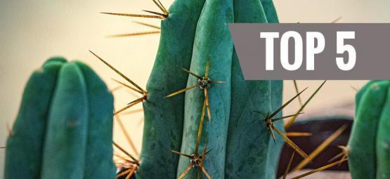 Top 5 Mescaline Cactussen