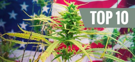 Top 10 Cannabis Strains Uit De VS