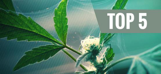 Top 5 Natuurlijke Bestrijdingsmiddelen Voor Cannabis