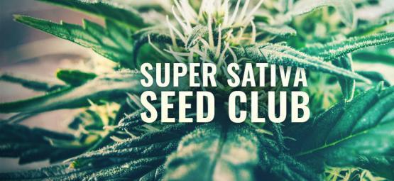 Super Sativa Seed Club is terug!
