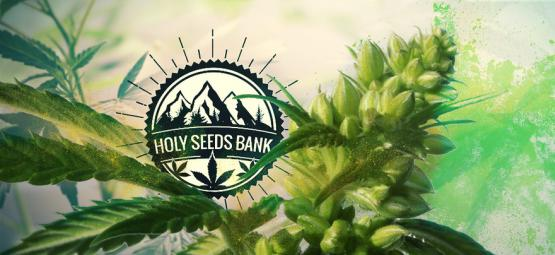 Zamnesia Presenteert: Pollen Van Holy Seeds Bank