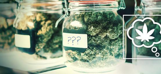 Hoe Zouden We Cannabissoorten In De Toekomst Een Naam Moeten Geven?