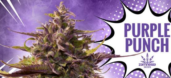 Purple Punch: Smaak, Kracht En Schoonheid — Alles In Één
