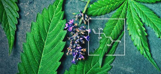 Wat Is Linalool En Hoe Heeft Het Interactie Met Cannabis?