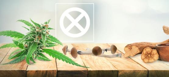 Wiet, Paddo's, Ayahuasca Zijn Geen Drugs