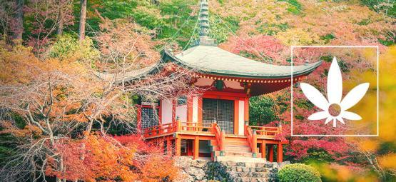 Hokkaido Hennep: Een Zeldzaam Japans Landras
