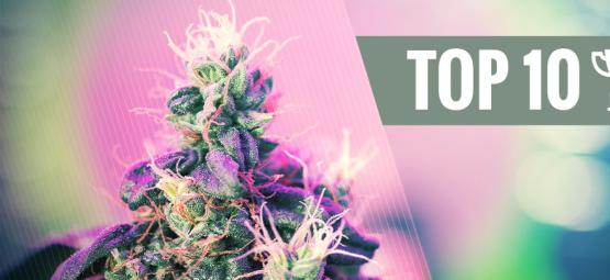 Top 10 Bekroonde Cannabis Strains