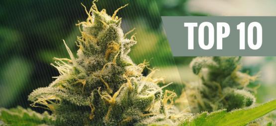 Top 10 Cannabisklassiekers