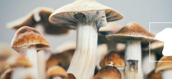 Hoe Kweek Je Magic Mushrooms Binnen?