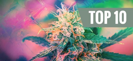 Top 10 Psychedelische Cannabissoorten