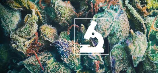 De Voordelen Van Een Microscoop Voor Cannabiskwekers En -Gebruikers