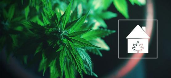 Hoe Kweek Je Cannabis Op Een Willekeurige Plek In Je Huis?