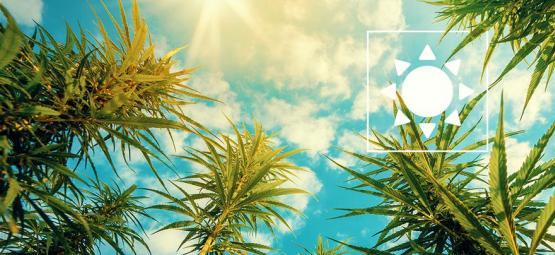 Hoeveel Zonlicht Heeft Cannabis Buiten Nodig?