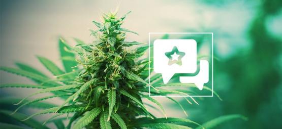 Tangerine Dream: Cannabis Strain Review & Informatie