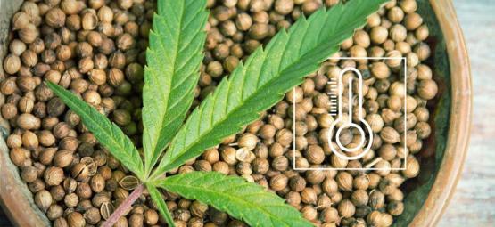 De Beste Outdoor Cannabis Zaden Per Klimaat