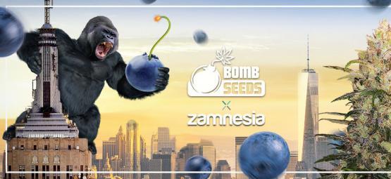 Zamnesia x Bomb Seeds: Bomberry Glue Auto (Limited Edition)