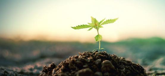 Hoe Maak Je Zelf Compost Voor Het Kweken Van Cannabis?
