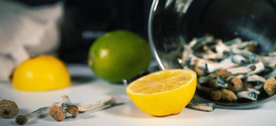 De Lemon Tek Voor Een Snellere Truffel/Paddo Trip