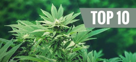 Top 10 Toepassingen voor Hennep: Een revolutionaire plant   Deel 1