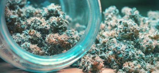 Cannabis Toppen: Drogen en Curen