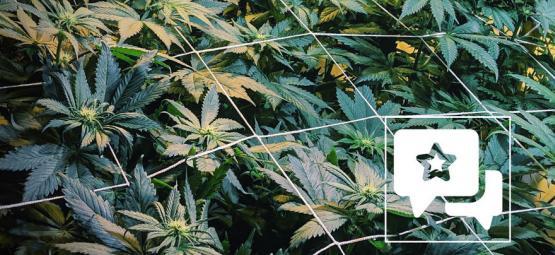 Soort Review: Casey Jones