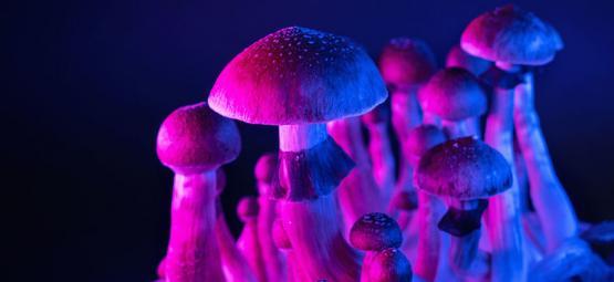 Magische paddestoelen en een hyper-verbonden brein