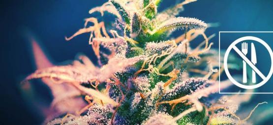 Cannabis Soorten Waar Je Niet De Munchies Van Krijgt?