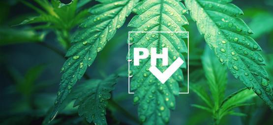 Hoe Pas Je De pH-waarde Aan Bij Het Kweken Van Cannabis?
