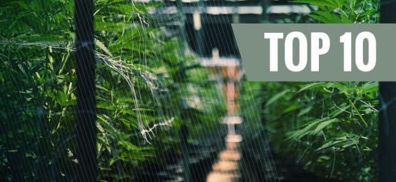 Top 10 Autoflowering Cannabis Soorten Voor Buiten