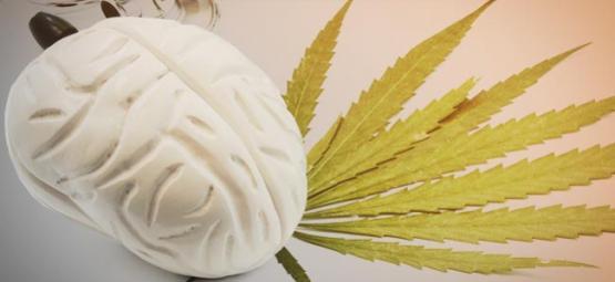 Wat Cannabis Met Je Hersenen Doet