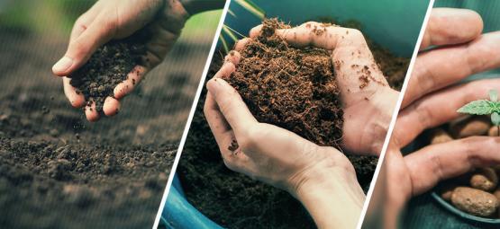 Kweek Je Wiet Het Best In Aarde, Kokos Of Hydrocultuur?