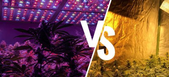 Kweeklampen: LED Vs. HPS