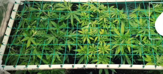 High efficiency kweken met aeroponics