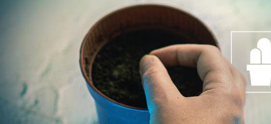 Hoe Je Je Eigen Mescaline Cactussen Vanuit Zaad Kweekt