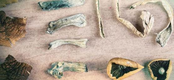 Hoeveel soorten magische paddestoelen zijn er?