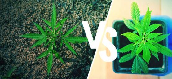 Buiten Cannabis Telen: De Grond Vs. Potten