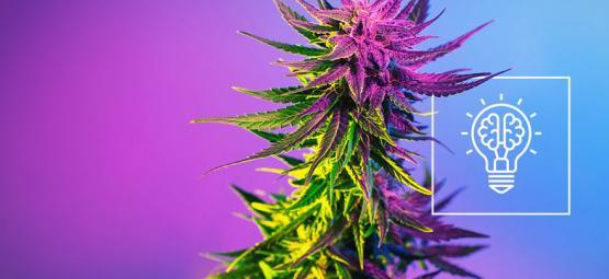 Maakt Cannabis Echt Creatiever?