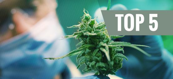 Top 5 CBD-Rijke Cannabis Soorten 2019