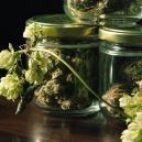 De verrassende connectie tussen cannabis en hop