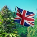 Cannabiszaden VK: De Beste Wiet Voor VK-Klimaten