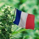 De Beste Cannabissoorten Voor De Franse Buitenkweek