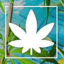 Waar Je In Europa Legaal Cannabis Kunt Roken