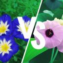 Morning Glory Vs. Hawaiian Baby Woodrose: Wat Is Het Verschil?